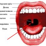 Нёбный язычок